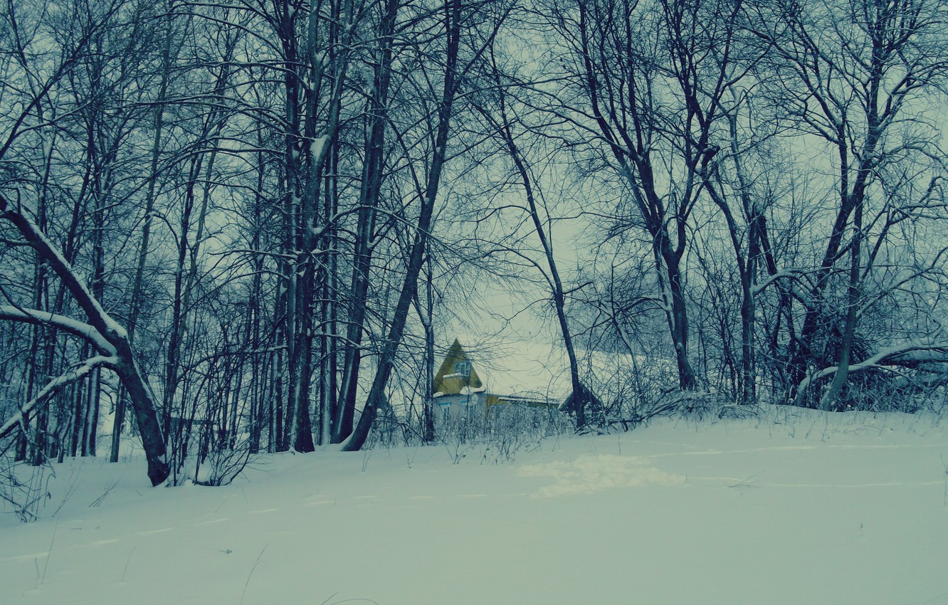 Photo wallpaper snow, trees, nature, house
