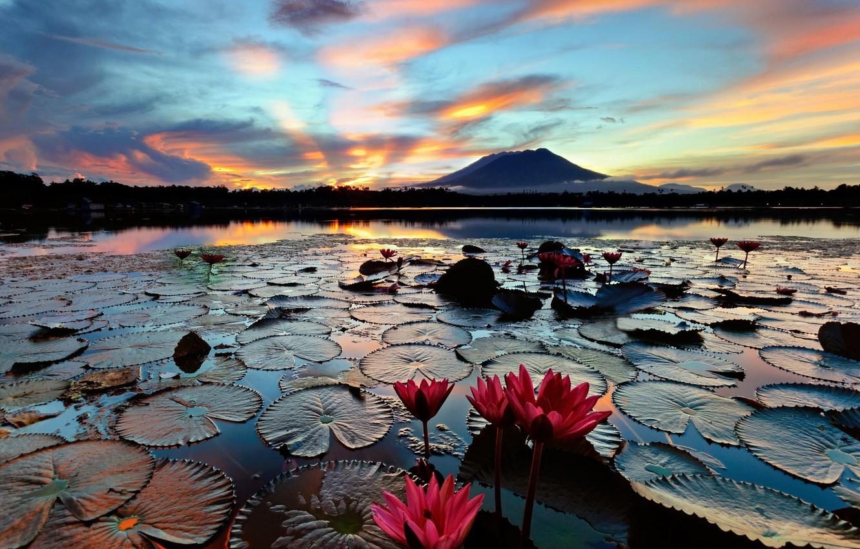 Photo wallpaper lake, island, morning, water lilies, water lilies, Philippines, Luzon, Sampaloc