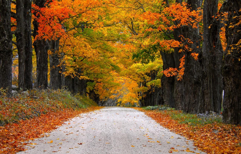 Photo wallpaper road, autumn, leaves, nature, mountain, colors, colorful, road, trees, nature, autumn, mountain, leaves, walk, path, …