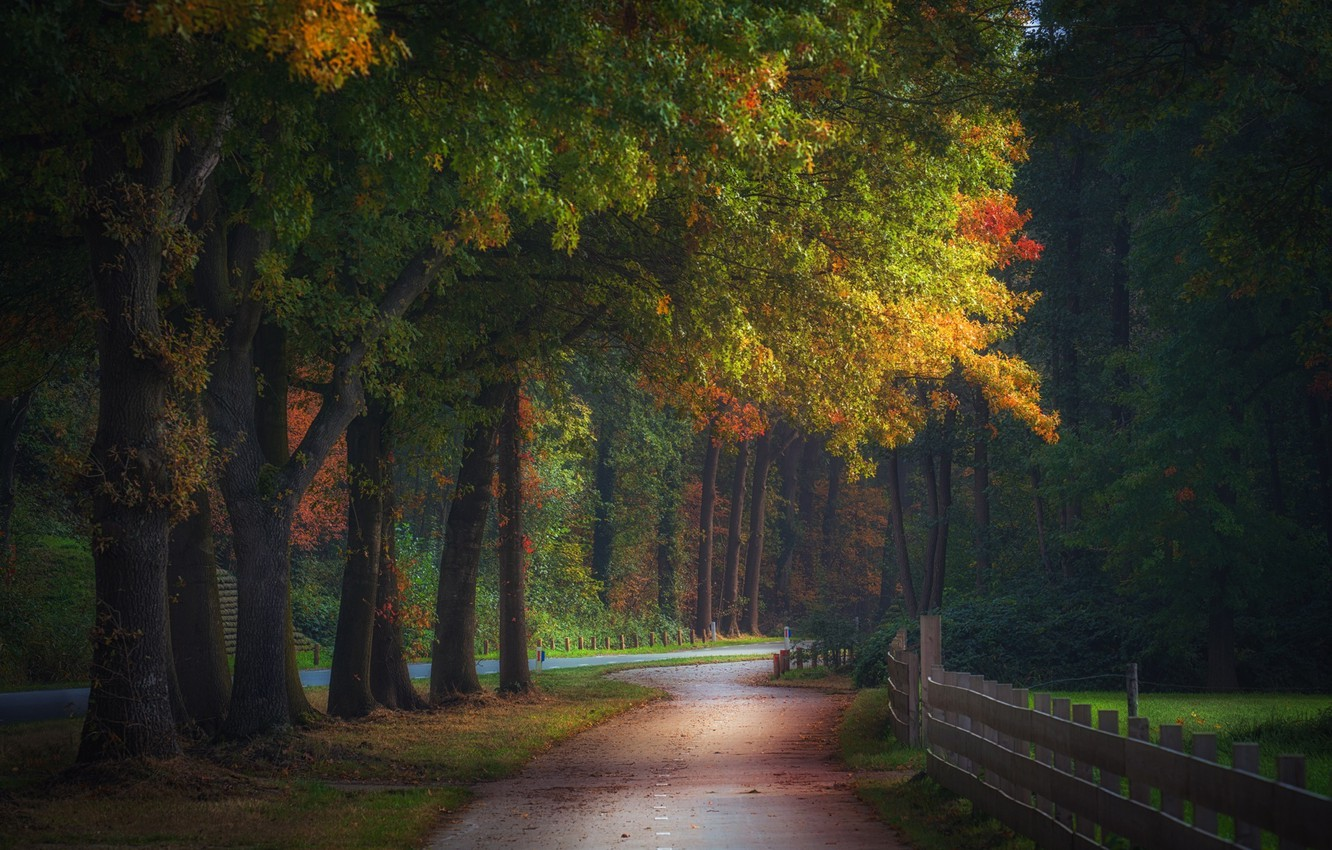 Photo wallpaper autumn, forest, nature, the fence, track