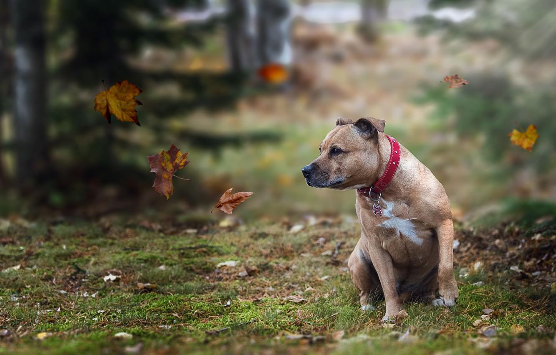 Photo wallpaper look, leaves, each, dog