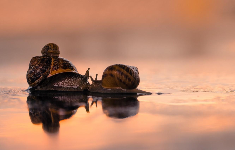 Photo wallpaper love, kiss, family, snails