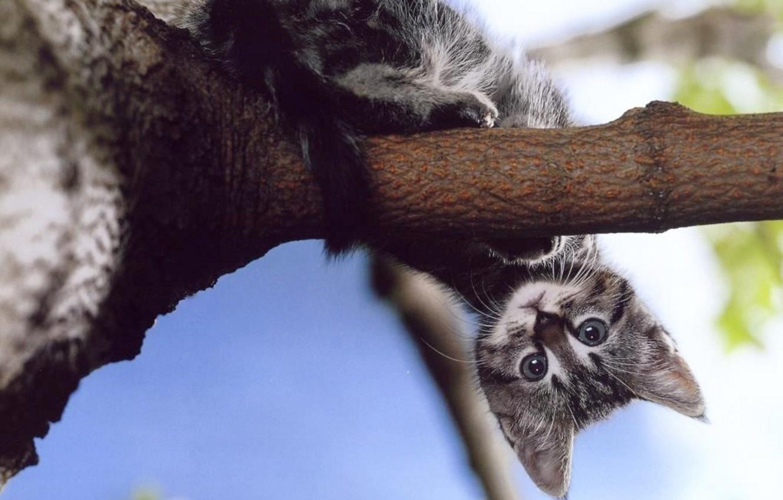 Photo wallpaper kitty, tree, branch