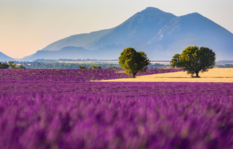 Wallpaper Field Flowers Mountains France Lavender