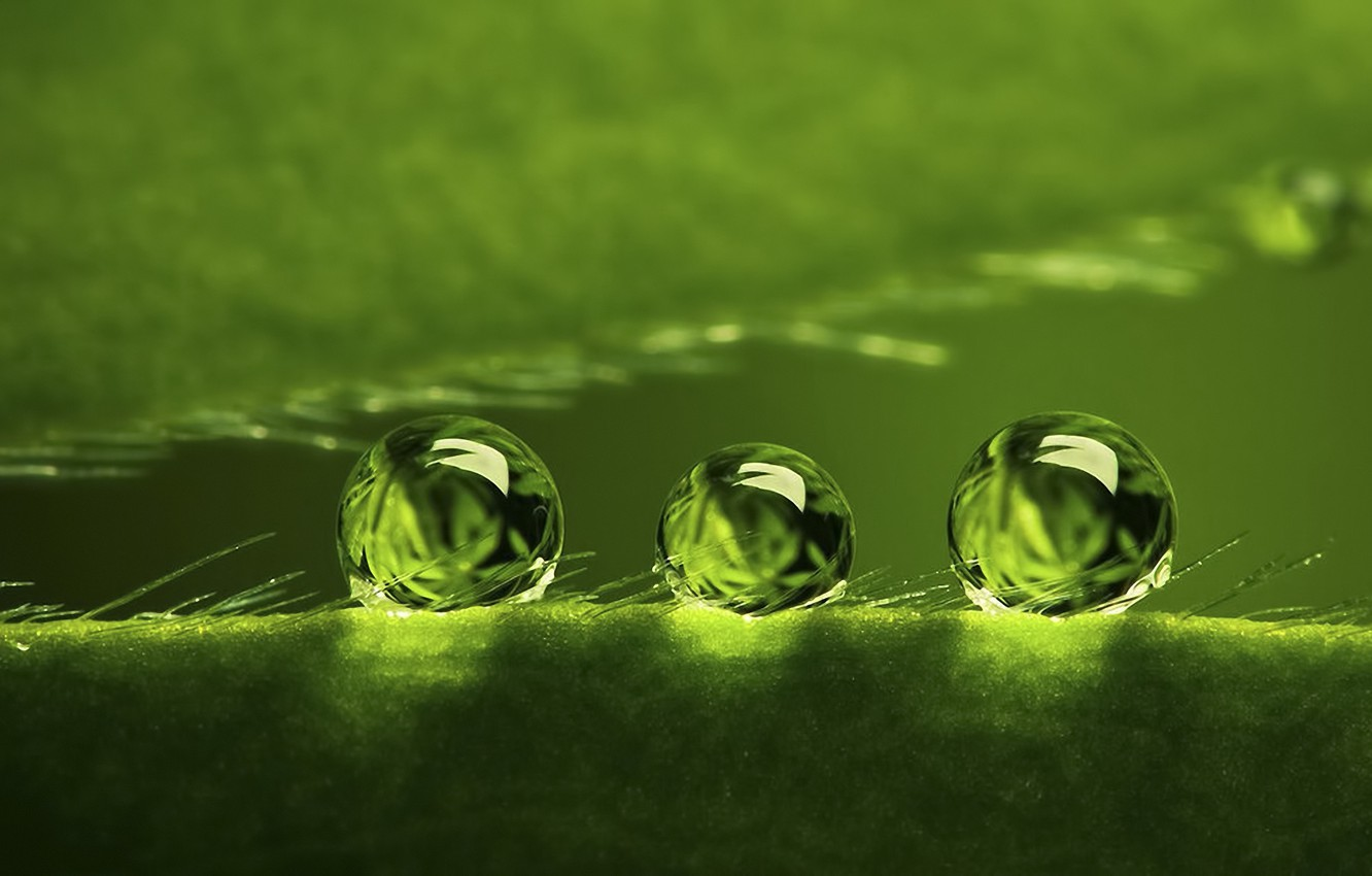 Photo wallpaper BACKGROUND, ROSA, WATER, DROPS, GREEN, SURFACE, PLANT, BALLS