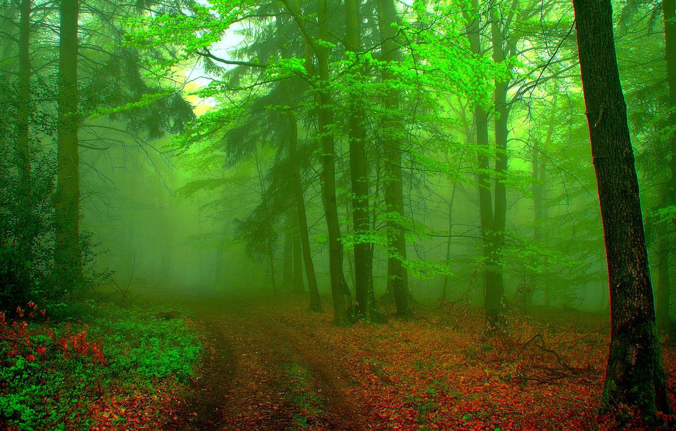 Photo wallpaper forest, landscape, fog, background, green