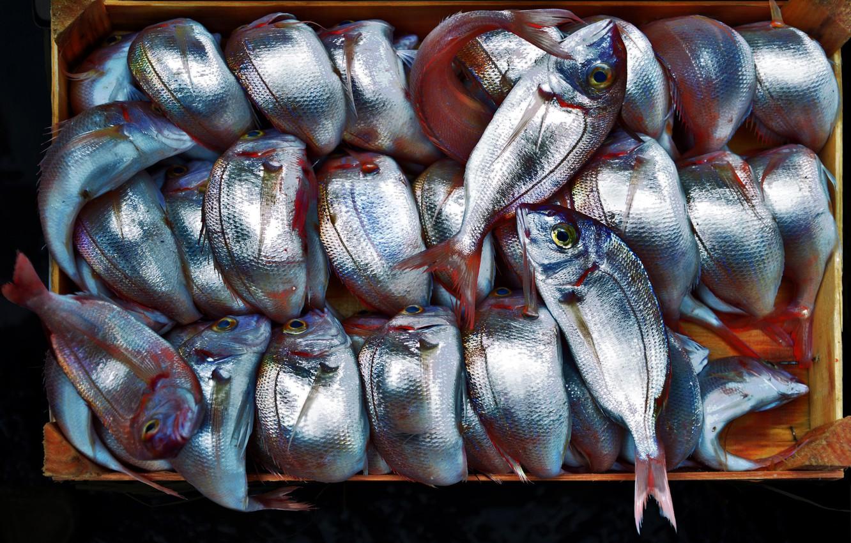 Photo wallpaper background, food, fish