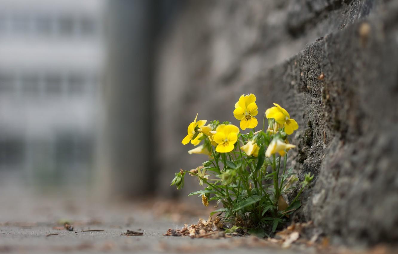Photo wallpaper flowers, the city, street