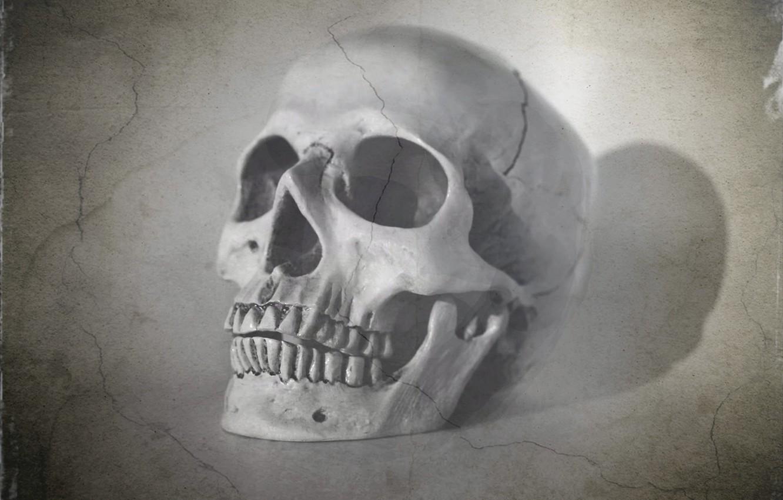 Photo wallpaper background, skull, texture