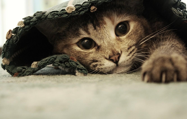 Photo wallpaper cat, eyes, cat, paws