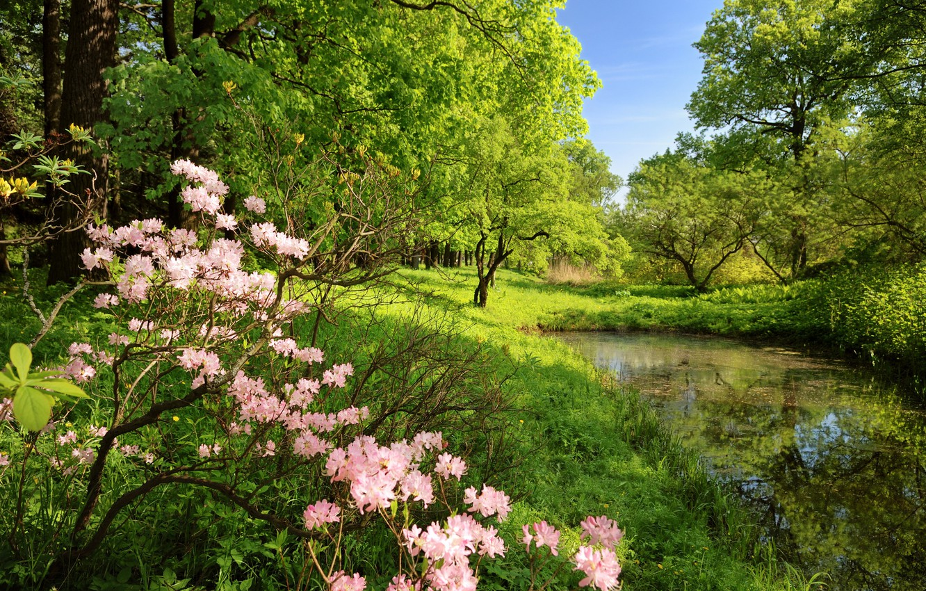 Photo wallpaper forest, trees, flowers