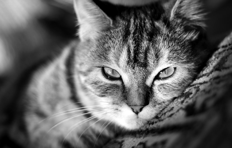 Photo wallpaper cat, cat, mustache, look, face, Wallpaper, nose, floor, wallpaper, kitty, Kote, Palace