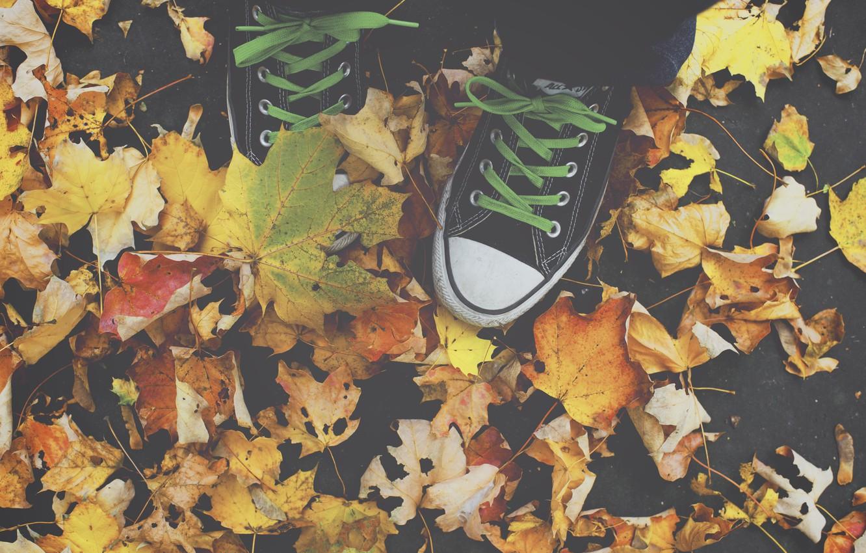 Photo wallpaper All Star, autumn, leaves