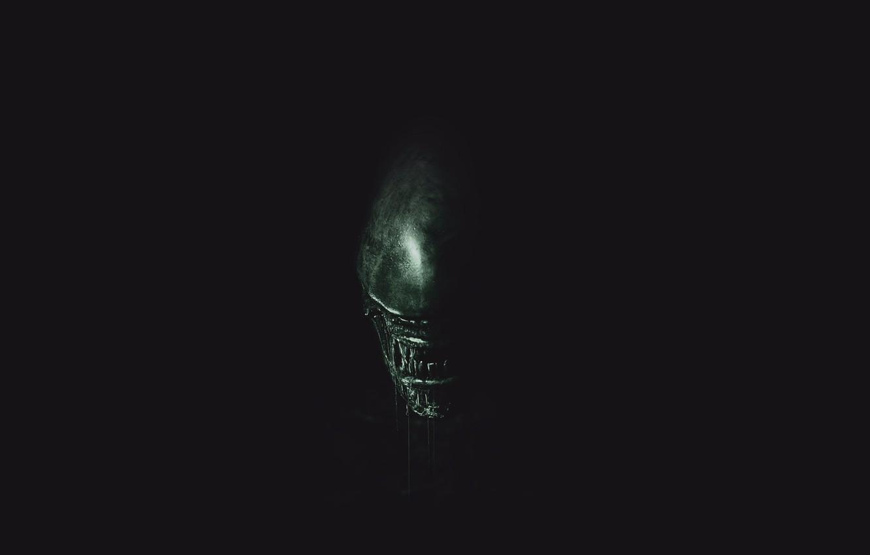 Photo wallpaper green, wallpaper, horror, black, exoskeleton, monster, alien, Alien, science fiction, predator, sci-fi, movie, fang, killer, …