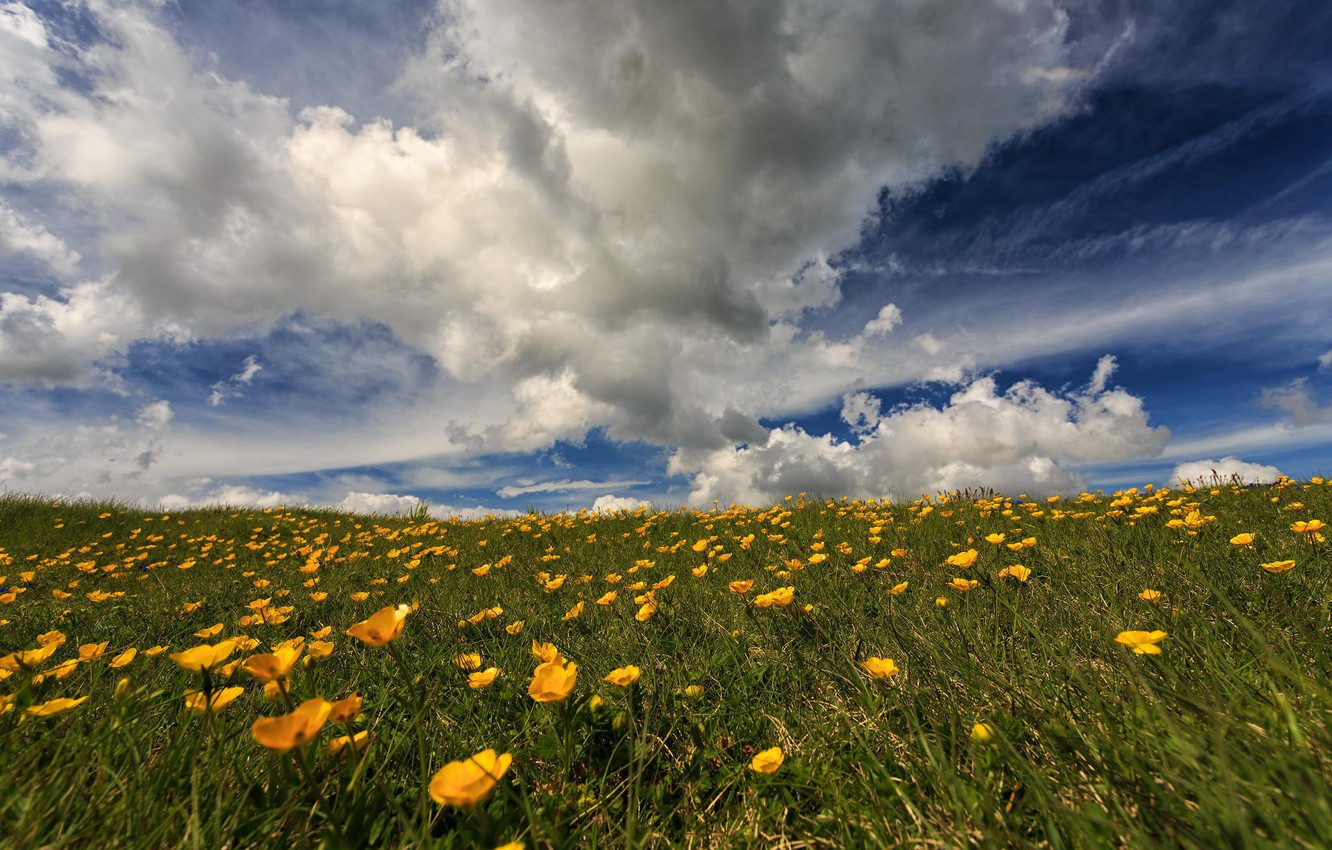 Photo wallpaper field, the sky, flowers, nature, the steppe