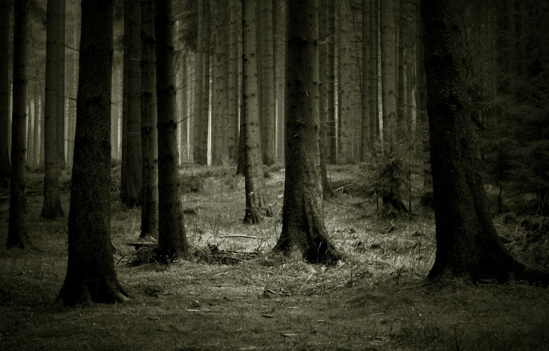 Photo wallpaper forest, trees, dark