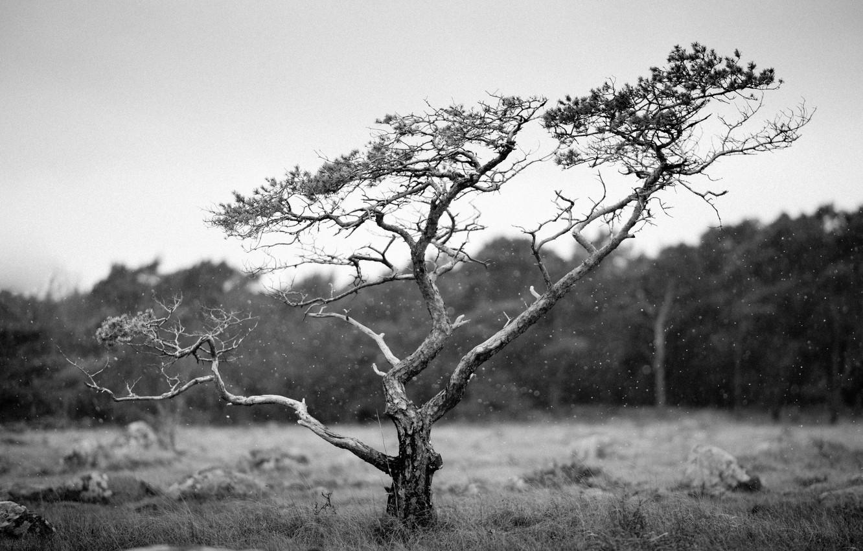 Photo wallpaper field, tree, countryside, cloudy, woodland, raining