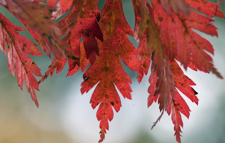 Photo wallpaper autumn, leaves, macro, nature, tree