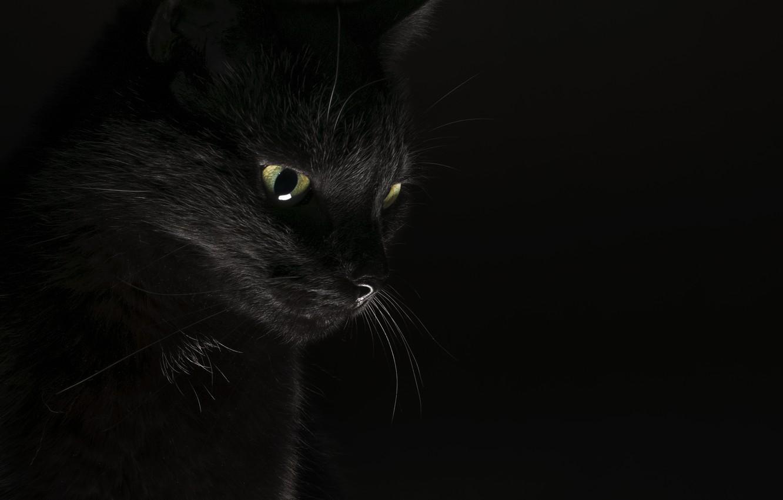 Photo wallpaper eyes, look, background, black, Koshak