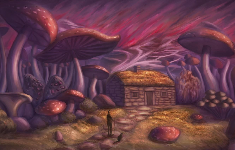 Photo wallpaper cat, house, mushrooms, People