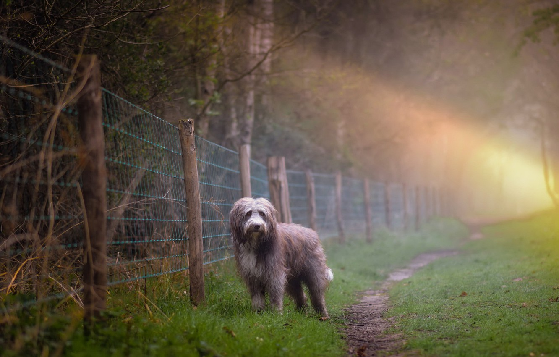 Photo wallpaper fog, dog, morning