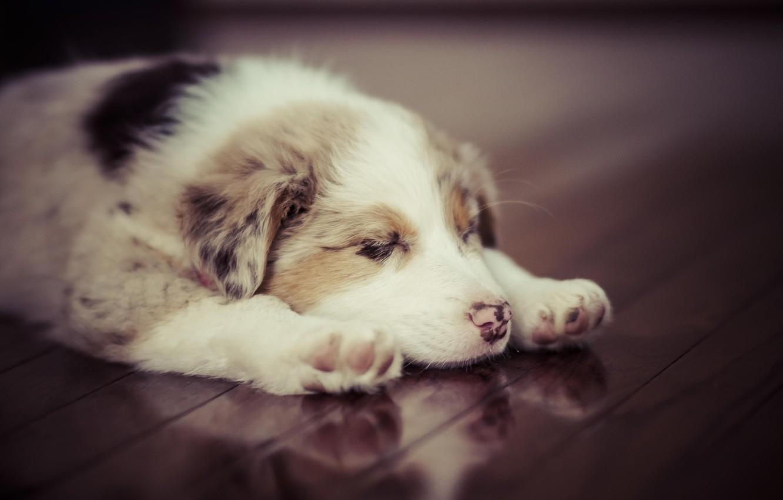 Photo wallpaper animal, dog, cute, puppy, puppy, dog, animal, cute