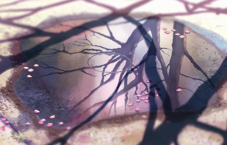 Photo wallpaper reflection, 5 centimeters per second, Makoto Xingkai, cherry leaves.
