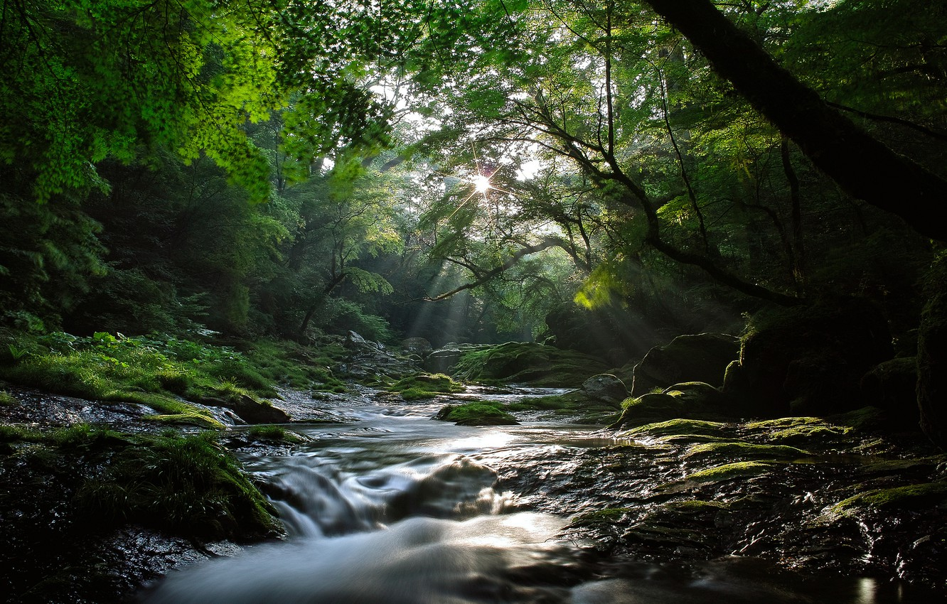 Photo wallpaper forest, the sun, rays, light, nature, river, stream, cool, maples