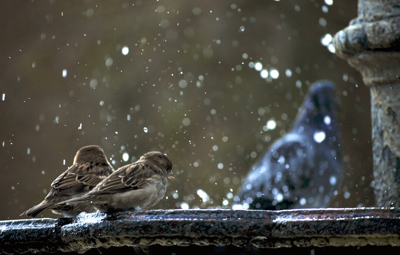 Photo wallpaper fountain, sparrows, ghoul is not in focus