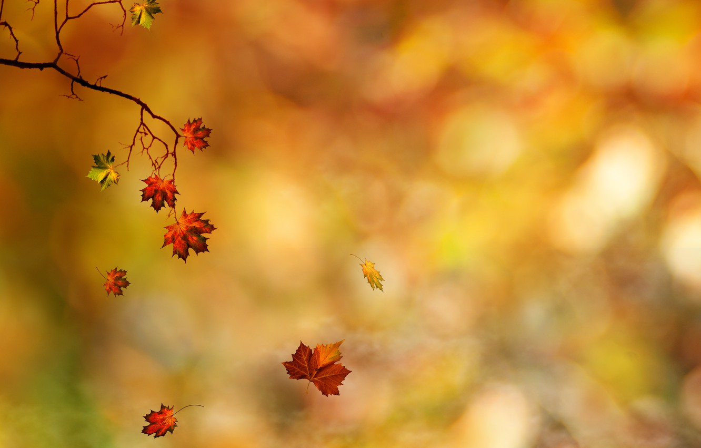 Photo wallpaper autumn, leaves, branch