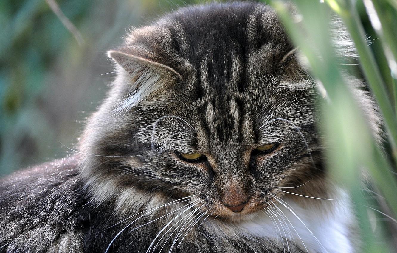 Photo wallpaper cat, mustache, background, wool