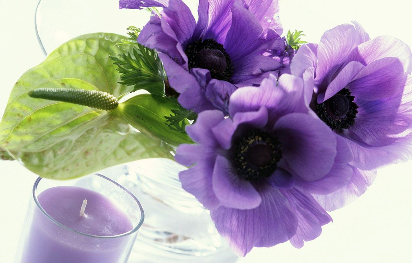 Wallpaper Candle White Background Purple Flowers Transparent Vase