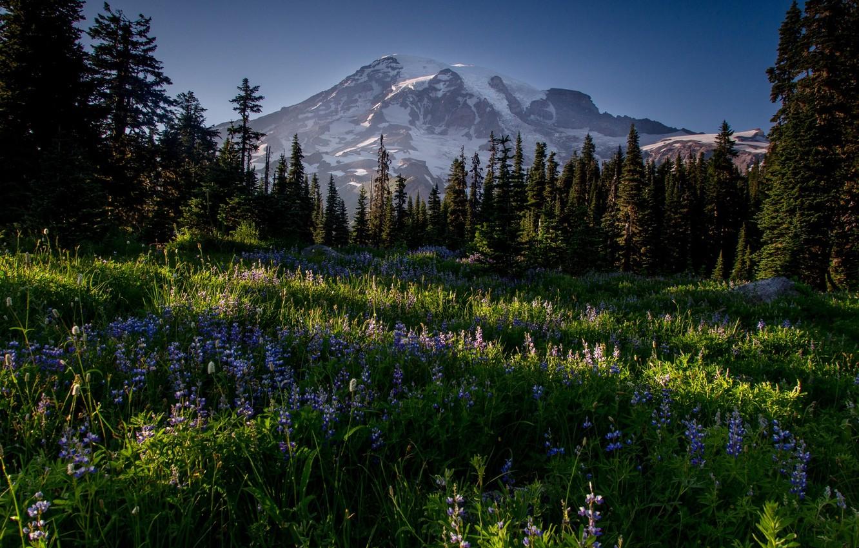 Photo wallpaper snow, flowers, mountain, plants, valley