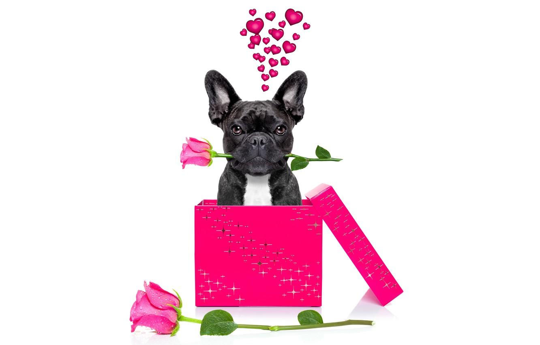 Photo wallpaper dog, love, rose, heart, dog, romantic, funny, cute