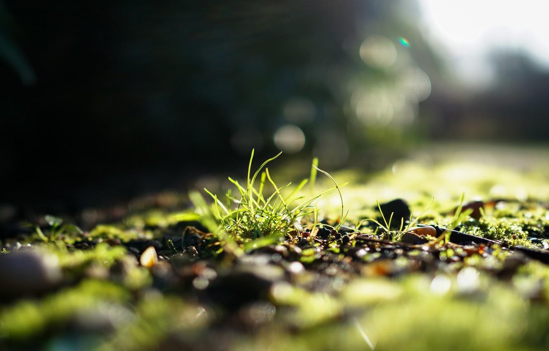 Photo wallpaper greens, grass, the sun, light, focus