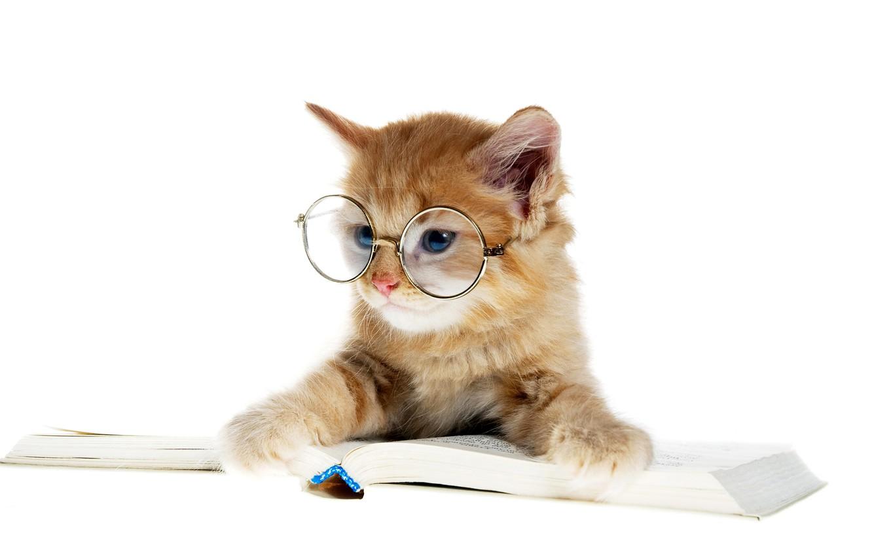 Photo wallpaper cat, glasses, book, kitty