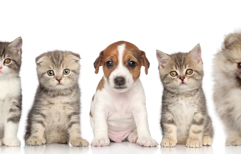 Wallpaper Puppies Kittens Kids Images For Desktop Section