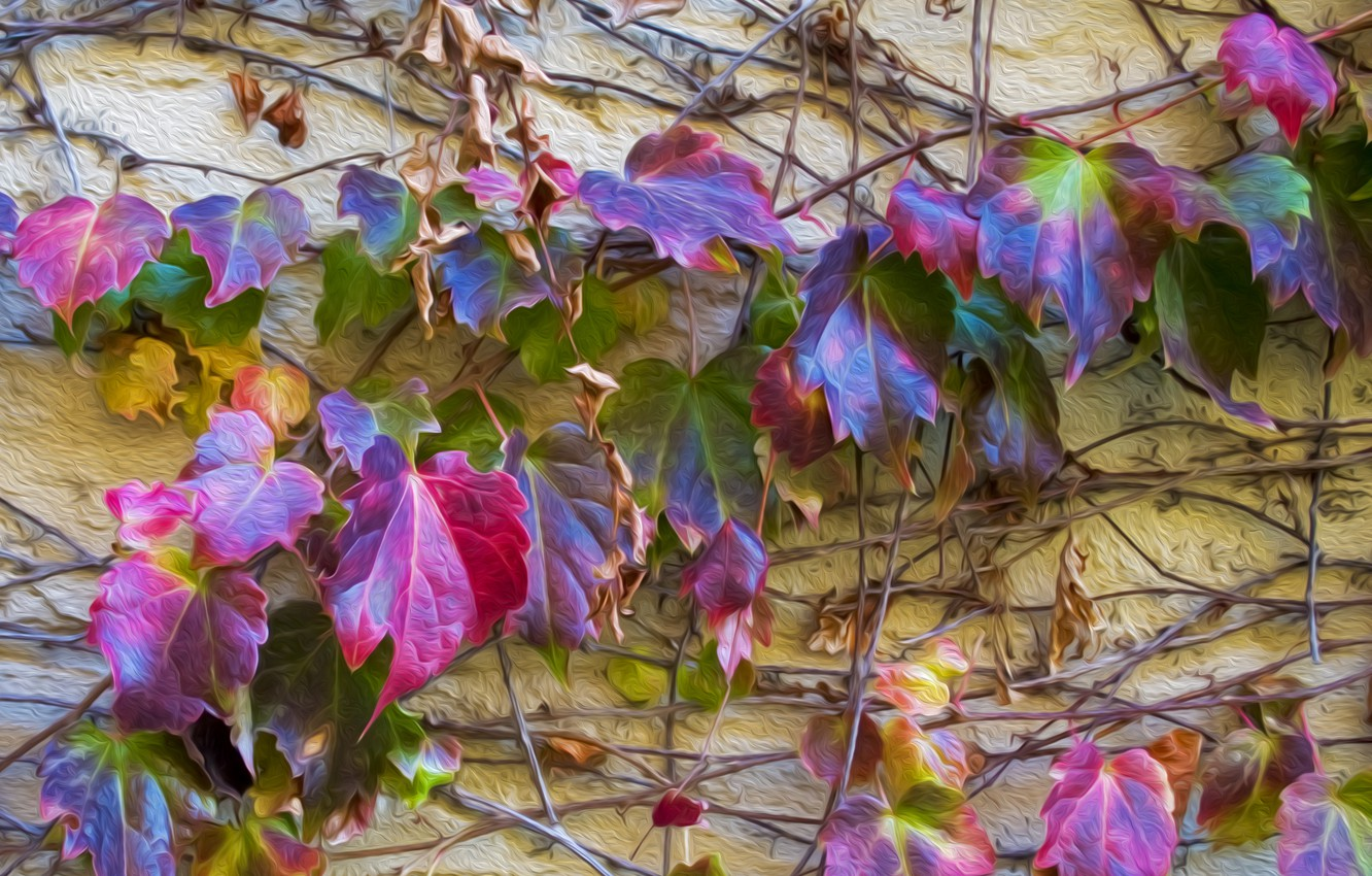 Photo wallpaper autumn, leaves, wall, color, stem, ivy