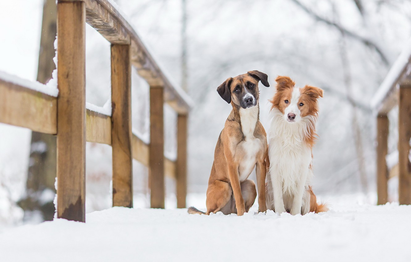 Photo wallpaper dogs, background, friends