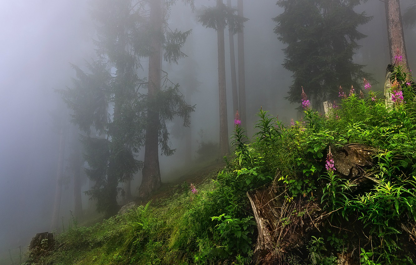Photo wallpaper forest, grass, leaves, trees, nature, fog, grass, forest, trees, nature, leaves, fog