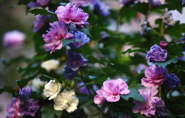 Photo wallpaper summer, flowers, Bush