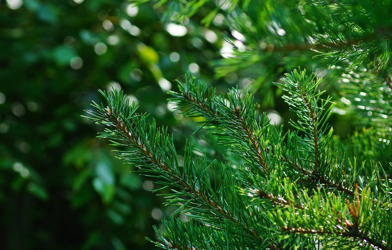 Photo wallpaper rays, light, needles, green, Tree, spot, bokeh