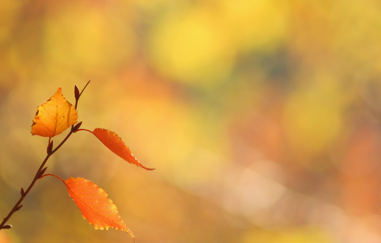 Photo wallpaper leaves, background, branch