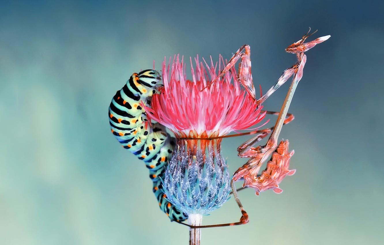 Photo wallpaper flower, macro, insects, caterpillar