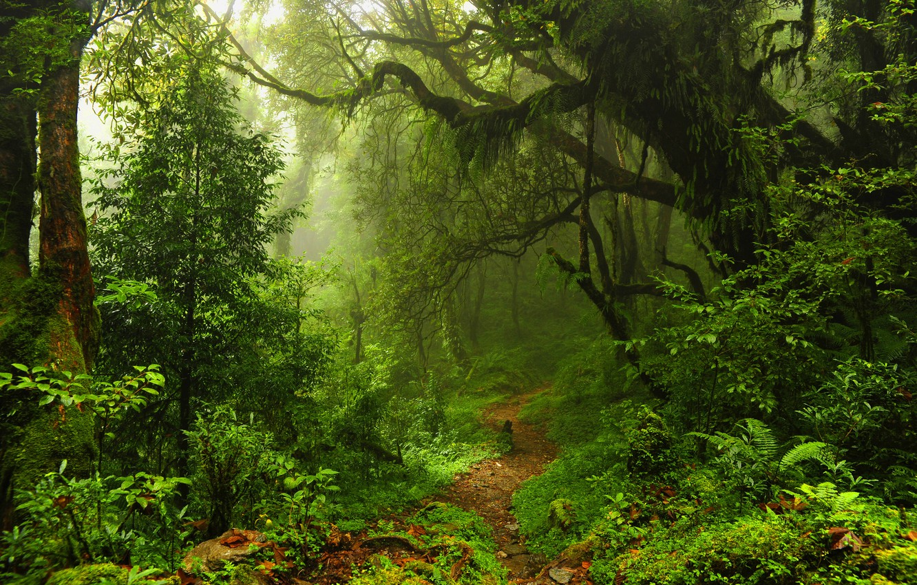 Photo wallpaper forest, leaves, trees, thickets, trail, thicket, jungle