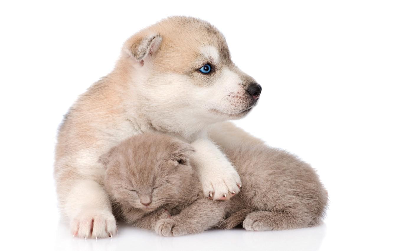 fluffy, sleeping, puppy, friends, husky