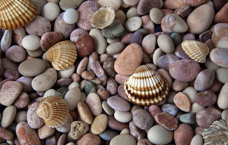 Photo wallpaper macro, stones, shell
