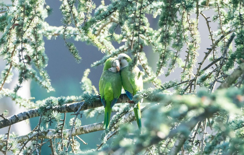 Photo wallpaper greens, birds, pair, parrots