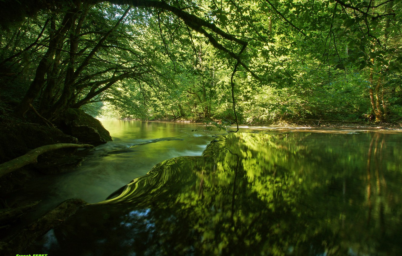 Photo wallpaper forest, water, trees, river