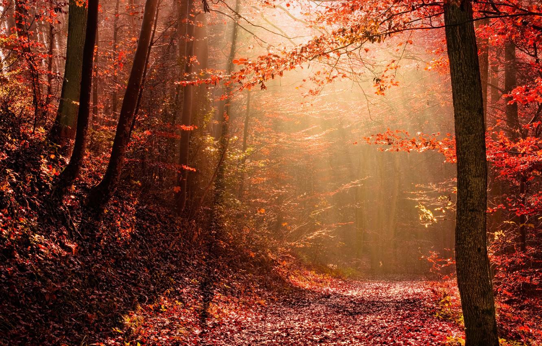 Photo wallpaper autumn, forest, light, nature